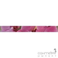 Фриз Береза керамика Фрезия Орхидея роз. (500х55)